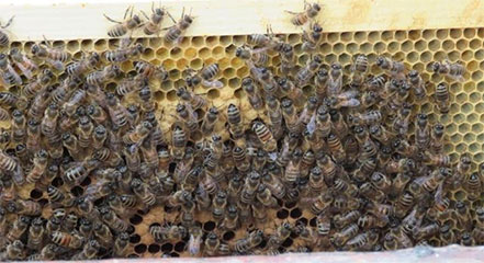 Dawson Bee Hive Successfully Overwinters