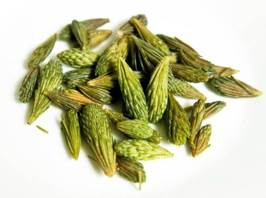 spruce-tips