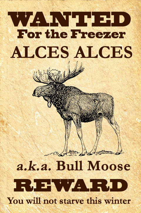 Suzanne Blogs: As Quiet as a Moose