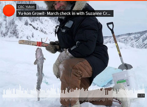 Yu-Kon Grow It: Suzanne Talks Burbot