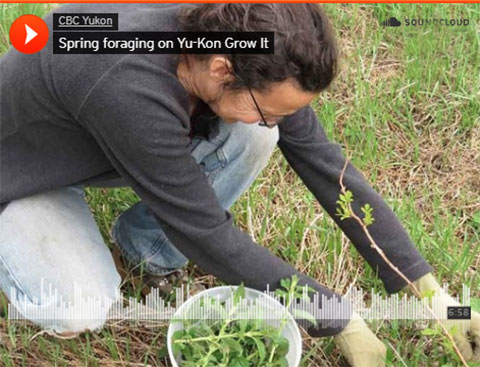 Yu-Kon Grow It: Spring Foraging