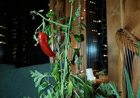 Suzanne's Blog: Winter Pepper