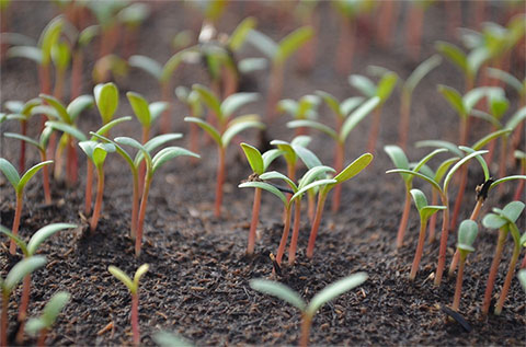 When Planning Planting it All Starts With the Seeds