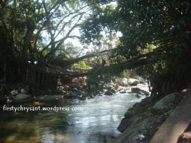 jembatan-akar-14