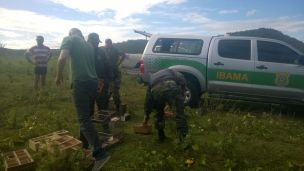 Fiscal Ambiental do Natal - GAAM - DEPREMA - Resgate de pássaros - (155)
