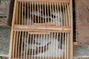 Fiscal Ambiental do Natal - GAAM - DEPREMA - Resgate de pássaros - (25)