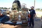 Caminhonetas carregadas com os animais resgatados