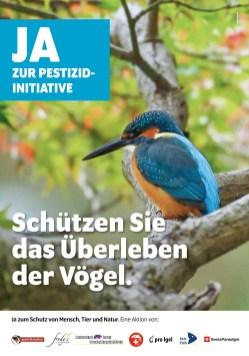 PI_F200_Eisvogel