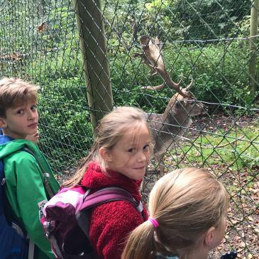 Drittklässler erleben den Heissi-Wald