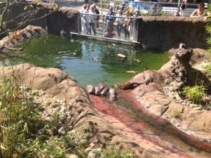 Otters splashing around