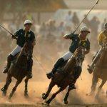 Polo-horses