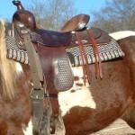 equitazione americana