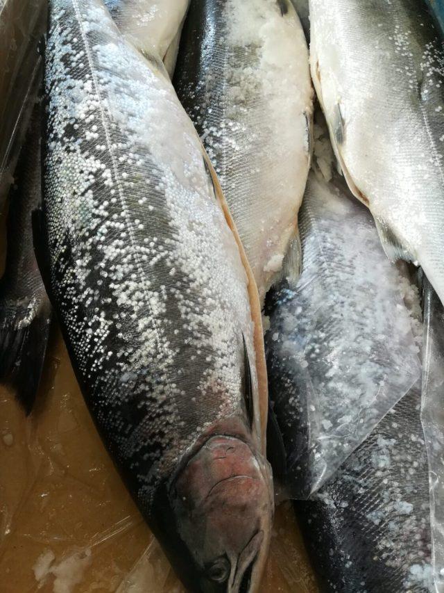 新巻鮭とは?語源は?塩引き、山漬けとの違いも解説します。