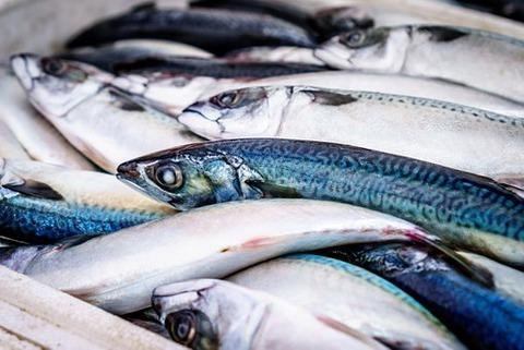 fish-933187__340