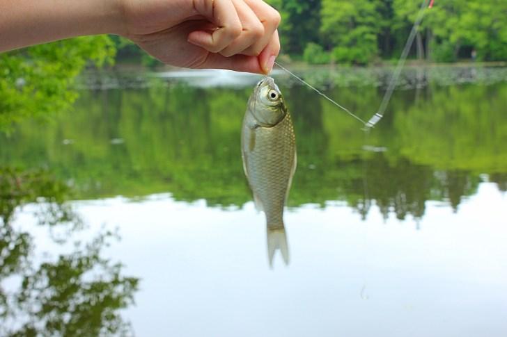ギンブナの釣り方