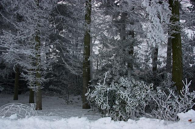 ホテイアオイは越冬可能?