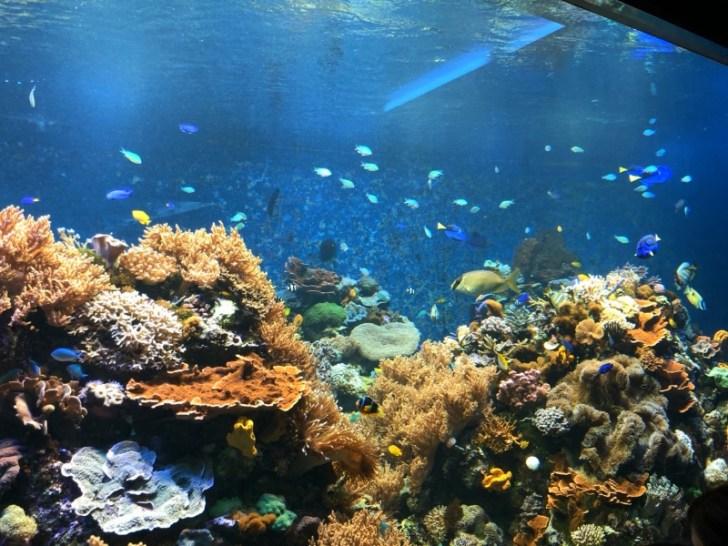 海水魚飼育のコツは?