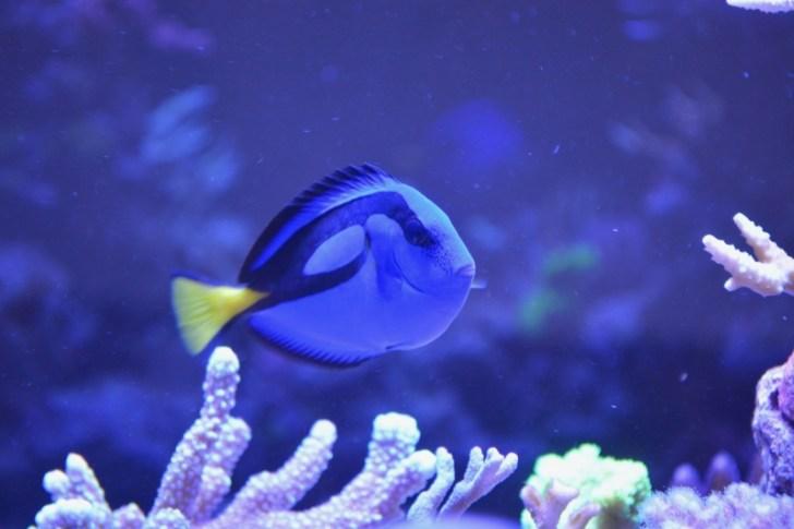 人工海水で飼育する