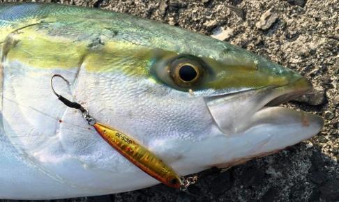 ショアスローで低活性の魚をゲット
