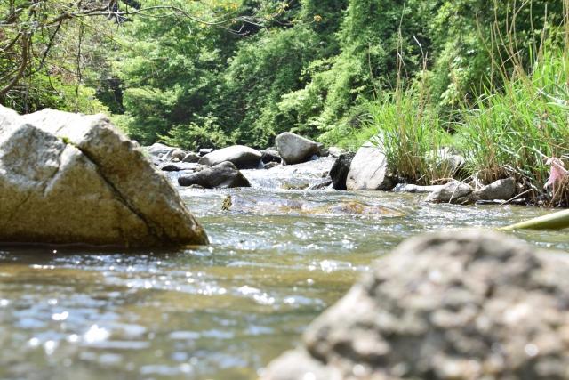 渓流釣りスタート