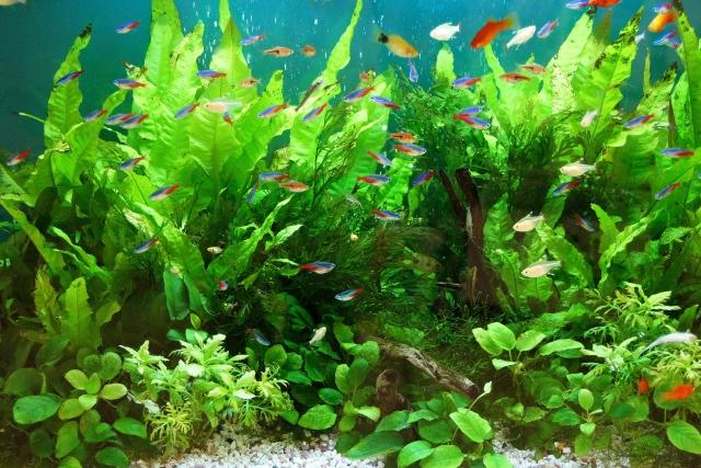 熱帯魚ショップの画像