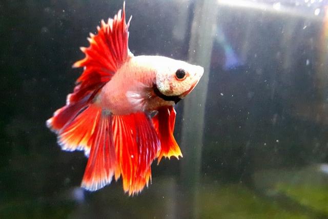 熱帯魚ショップの画像2