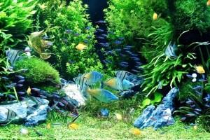 水草水槽はオシャレで綺麗!