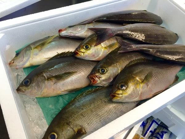 イサキは夏が美味しい人気魚