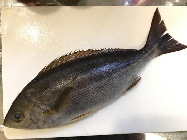 イサキってどんな魚?