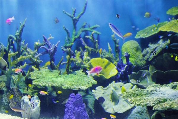 東京の水族館は見所たくさん!