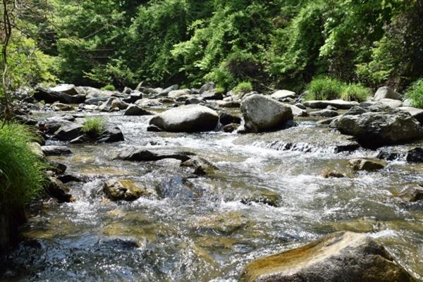 イワナは綺麗な渓流域に生息