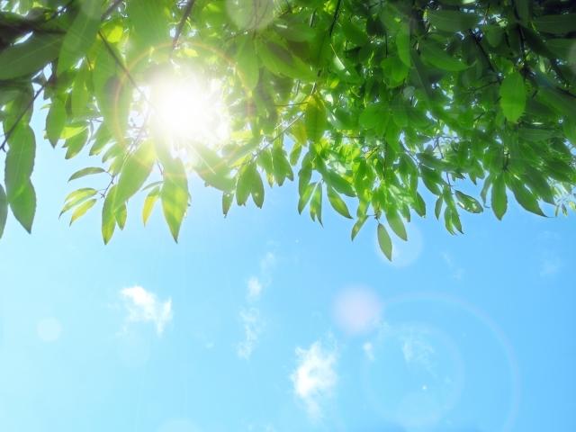 水槽の水草が枯れるのは日光不足?