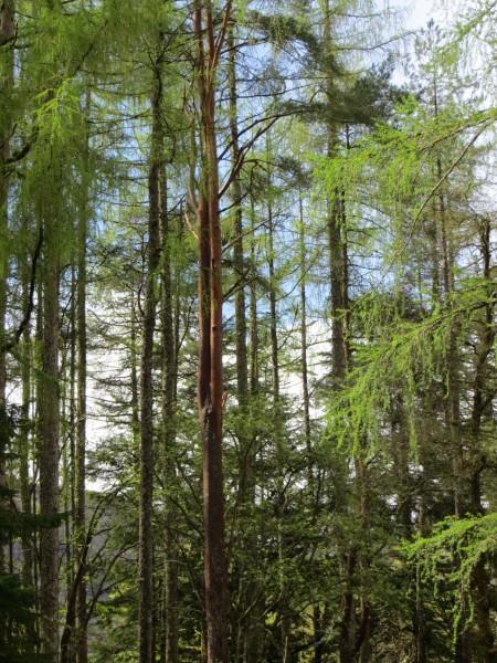 forêt dans le Glen Coe