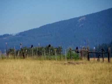 oiseaux à Trout Lake - état du Washington