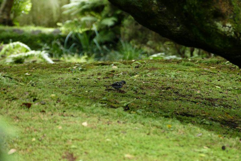 Jardin botanique d'Horta sur Faial - Açores