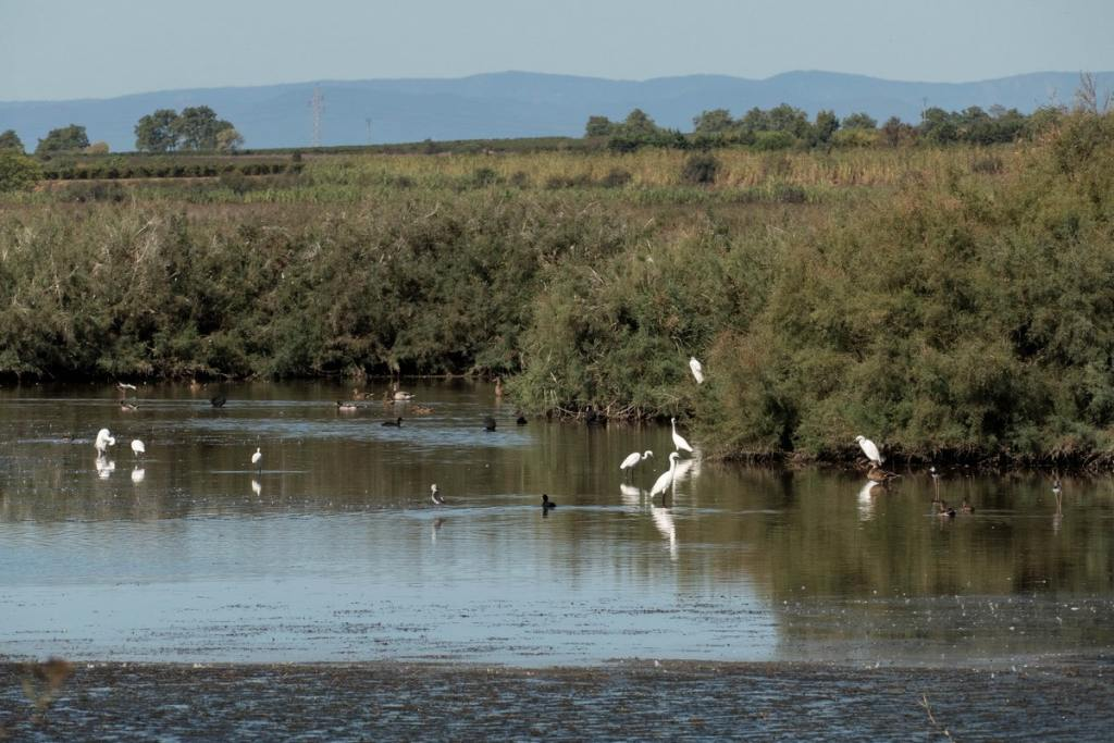 oiseaux posés dans la réserve de Bagnas