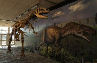 squelette de dinosaure dans le Quarry Exhibit Hall - Dinosaur National Monument