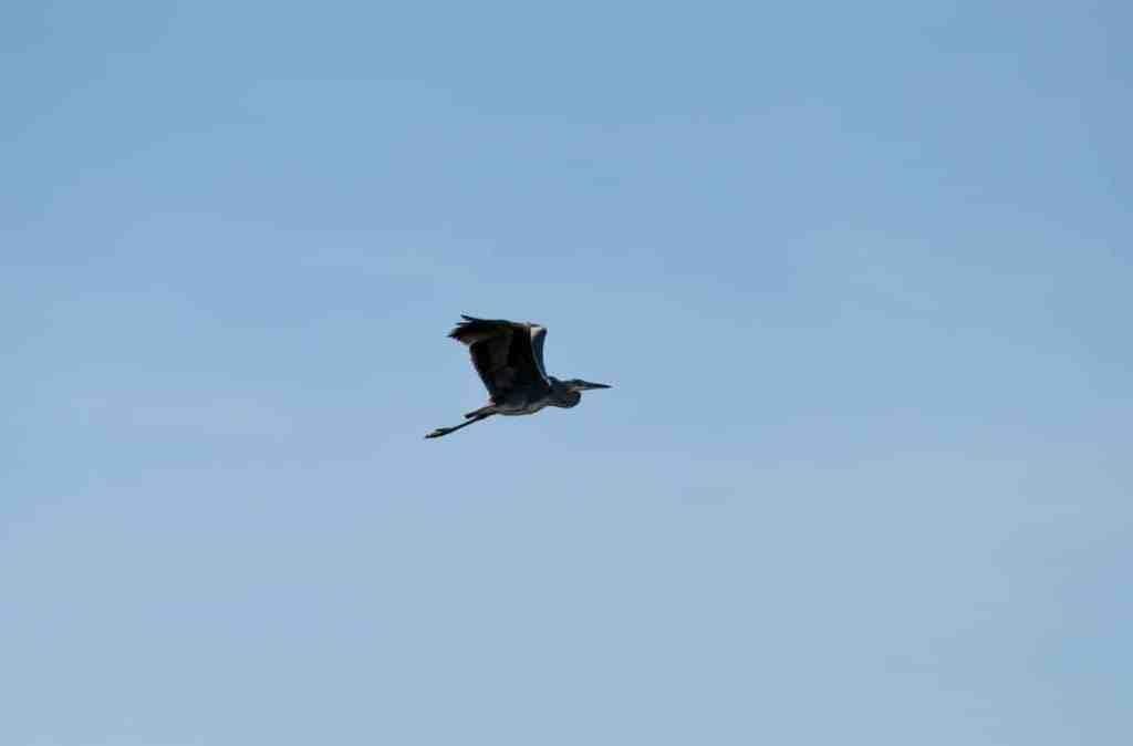 un oiseau au dessus du Sentier du Grand Castelou, Narbonne
