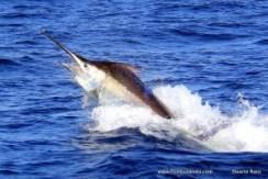 Bazaruto Golden magic! Mozambique magnificent fishing!