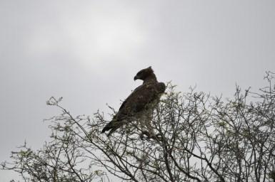 Birding is rewarding in avian life rich Southern Africa