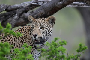 Safaris and hunting trips in Southern Africa