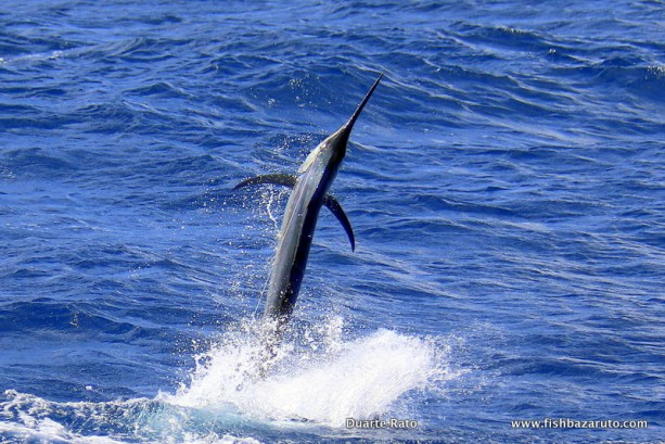 Bazaruto / Vilankulos Fishing: it´s like the Marlin want to hand around year-round at Vilankulos / Bazaruto. After we had some excellent Black and Blue Marlin fishing in April the fish where still around in May and even going into June fish are being seen on a regular basis.
