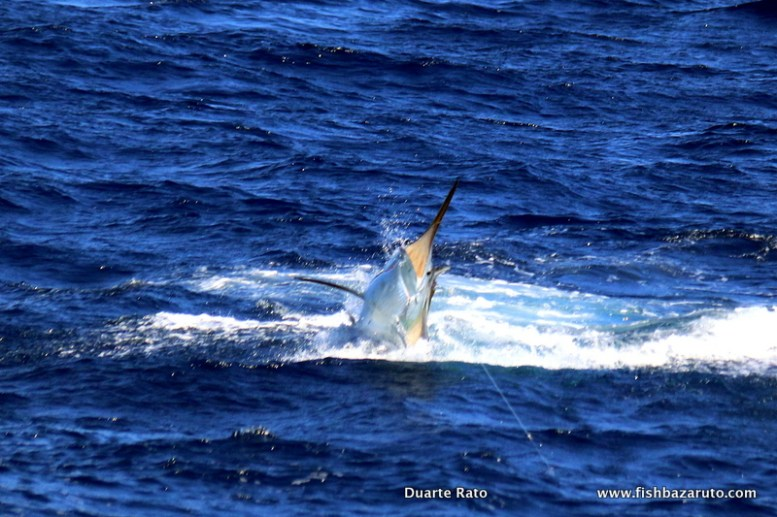 Black marlin!