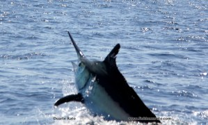 Louwtjies first marlin nearly went the mark!