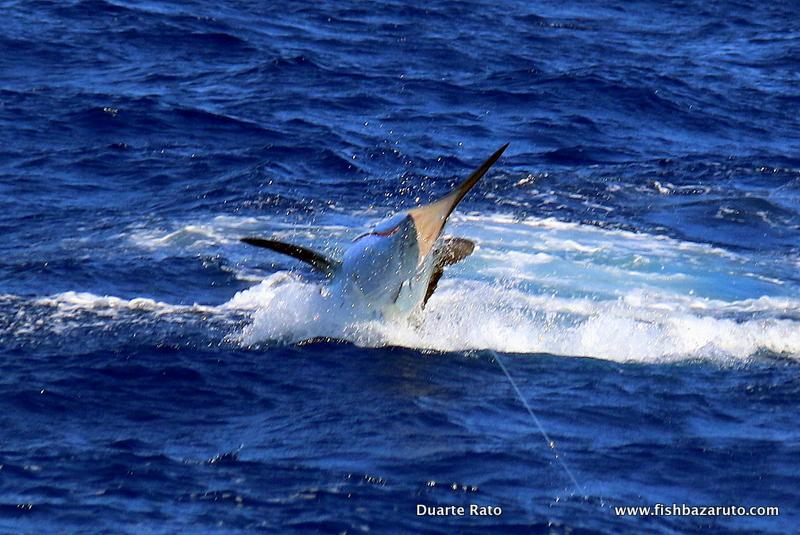 Catching Bazaruto Marlin on Bait