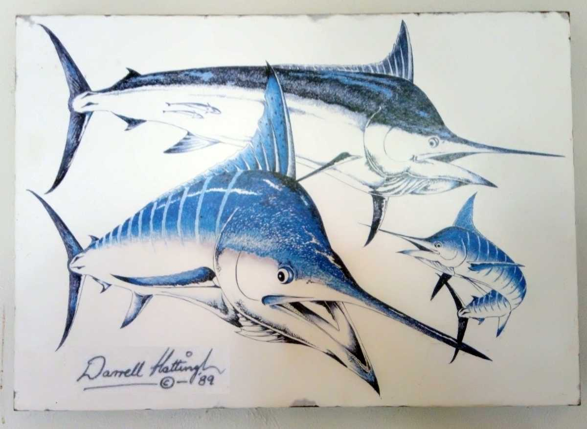 Beaten Black and Blue: Marlin identification by Captain Duarte Rato