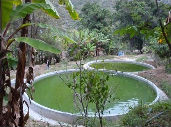Semi-intensive tilapia and catfish farming in Hidalgo, México (in