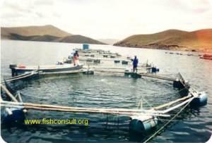 Trout culture in Peru (02)