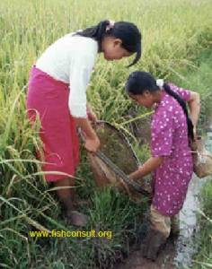 Women in fishery and aquaculture in Nepal (02)