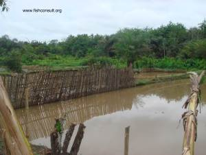 Fencing a fish ponds in Banin